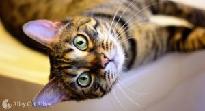 6 Ways to Make A Cat's Life Better This National Cat Health Month