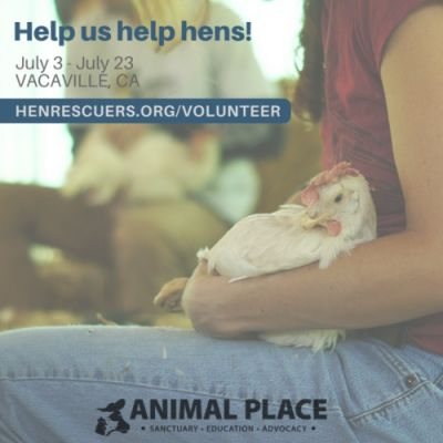 Help us help hens! Volunteer after our next rescue in Vacaville