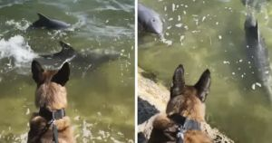 Police Dog Forms Unbreakable Bond With Two Dolphins