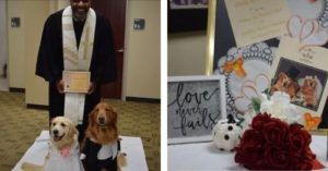 Therapy Dogs Tie The Knot In An Adorable Doggie Wedding