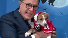 Stephen Colbert And Billy Eichner Try To Rehouse Adorable Rescue Dogs For Halloween