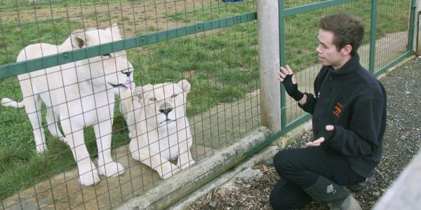Here's what it's like to be a big cat keeper