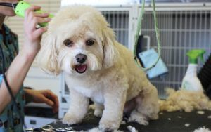 Recent Dog Deaths Spark Bill To Require Groomer Licensing