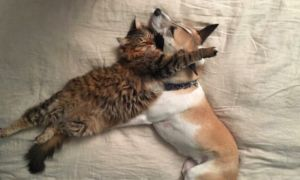 "Rescue Dog With Separation Anxiety Gets Her Very Own ""Therapy Kitten"""