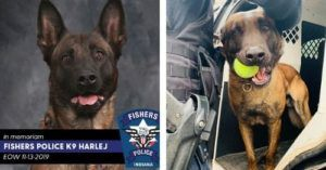 Handler Remembers K9 Officer Harlej, Who Was Shot And Killed In The Line Of Duty