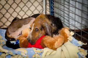 """Stray Dog Was """"Skin & Bones"""" Until This Rescue Changed His Life"""