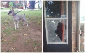 Groomer Refuses To Give Dogs Back To Non-Paying Customer, Gets Window Smashed