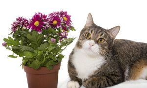 Allergic? You Can Keep Your Cat!