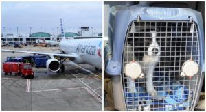 New Certification Process Aims To Help Improve Safety Standards Of Pets On Airlines