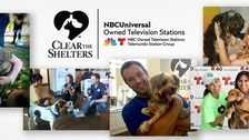 Let's 'Clear the Shelters' on Saturday, August 19!