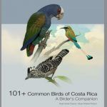 A Review of 101 + Common Birds of Costa Rica- A Birder's Companion
