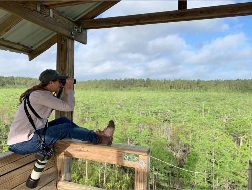 Team Sapsucker Finds 242 Species Along the Gulf Coast on Big Day 2019