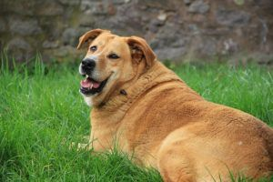 3 Great Ways To Help Your Chubby Dog Drop Some Pounds