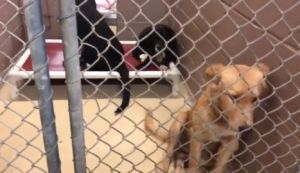 Houston Shelter In Desperate Need After Taking In 200 Surrendered Animals Memorial Day Weekend