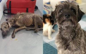 Woman Rescues Starving Dog Left to Die on Streets