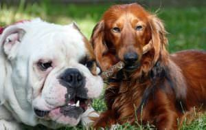 The 6 Most Common Inherited Diseases In Dogs