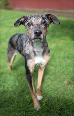 """SPROUT"" dainty speckled American Shelter Dog Mix"