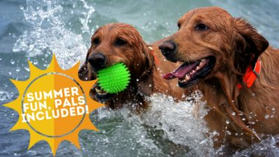 Summer Fun, Pals Included!