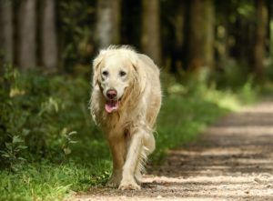 8 Changes To Expect As Your Dog Becomes A Senior