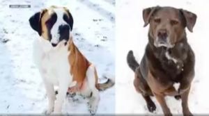 2 Dogs Die, 4 Become Ill From Poisonous Mushrooms