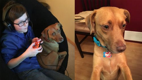 We adopted our dog about two years ago. We
