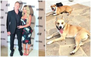 Reality Stars Decide To Keep Rescue Dog Months After He Bit Their Son