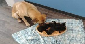 Stray Dog Kept Five Kittens Warm On The Side Of The Road. Now She Needs A Home