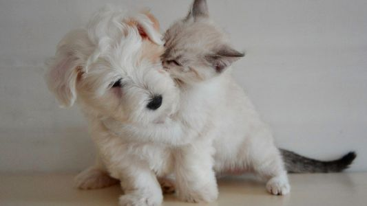 5 Common Mistakes to Avoid During Responsible Pet Owner Month. And Beyond