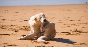 This Small Tweak To Your Dog's Diet Can Help with Summer Itchiness & Allergies