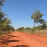 Birding the Dampier Downs Road