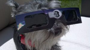 How The Upcoming Solar Eclipse Might Affect Pets