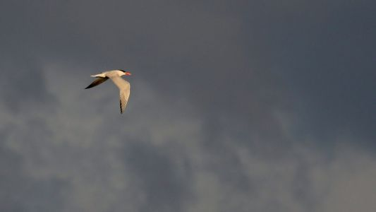 View From Sapsucker Woods: Storm Clouds Brewing for the Migratory Bird Treaty Act