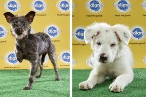 "This Year's ""Puppy Bowl"" Will Feature 3 Adorable Special Needs Pups"