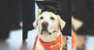 Therapy Dog Awarded Honorary Doctorate Degree In Veterinary Medicine