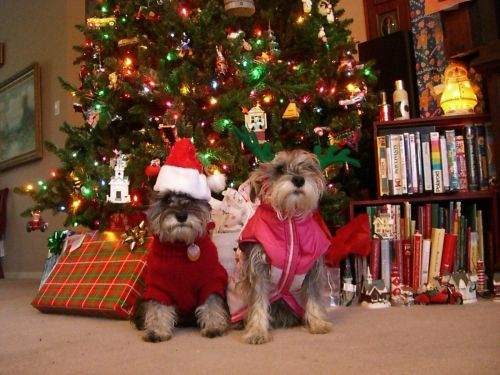 Christmas Present Ideas for Your Pup | Winslsow Animal Hospital Dog & Cat