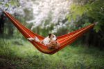 How To Spend a Perfect Summer Day With Your Dog