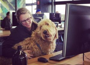11 Companies That Let You Bring Your Dog To Work