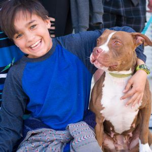 "There's More to ""Pit Bulls"" Than Meets the Eye"