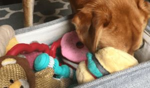 The Ultra-Critical Thing All Dog Parents Should Do With Their Pup's Toys