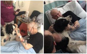 Grandfather's Dying Wish Is Granted When He Sees His Dog One Last Time