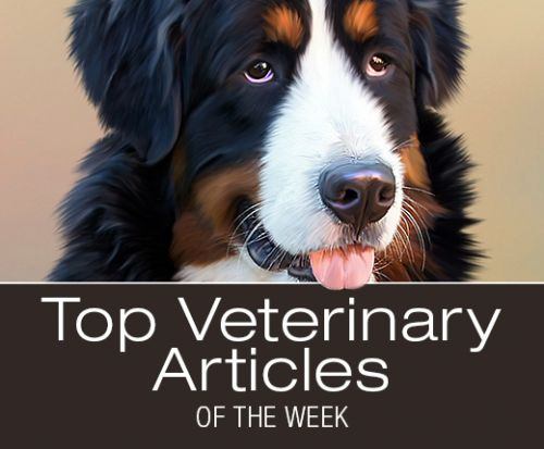 Top Veterinary Articles of the Week: Vaccination Protocol, Fecal Transplant to Treat Parvovirus?, and more
