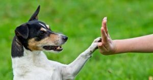 10 Super Impressive Tricks Any Dog Can Learn