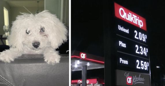Thieves Snatch Woman's Dog When She Turns To Pump Gas