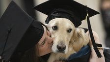 Griffin The Golden Retriever Receives Honorary Diploma At Owner's Graduation