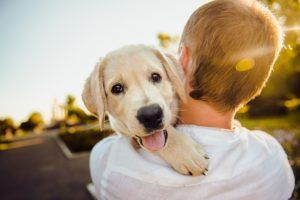 7 Best Summer Pet Products And Services You Need To Know About
