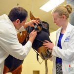 Exploring Equine Recurrent Uveitis and How You Can Treat It