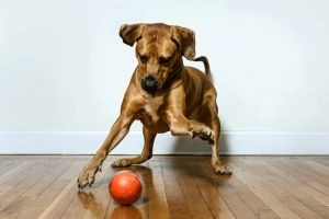Playdate Launches First Ever Smart Ball That Allows Pet Owners To Play With Their Pets Remotely