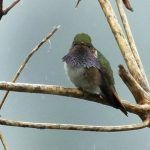 15 Hummingbirds that Can Only Be Seen in or Near Costa Rica
