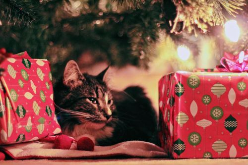 The Perfect Gift for the Perfect Cat. Or Cats | Winslow Animal Hospital Dog & Cat