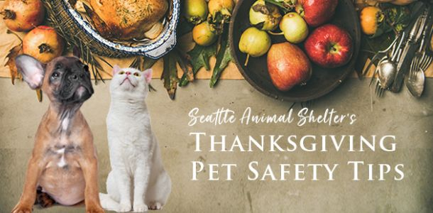 Seattle Animal Shelter offers 10 tips for Thanksgiving pet safety